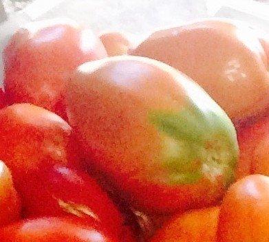 5 paquets de 25 graines de coeur Sambor - semences de tomate
