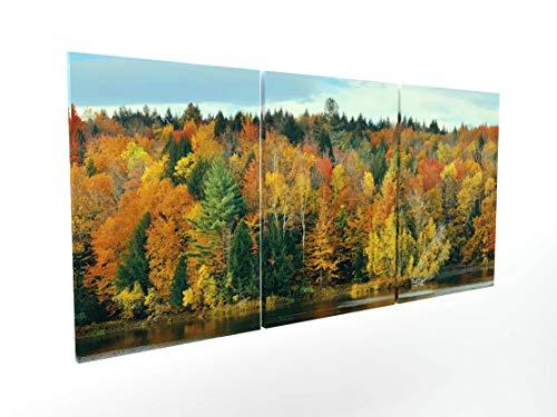 Panorama Composición Cuadro Lienzo Bosque Otoño
