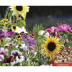 Bobby-Seeds Bio-Blumensamen Bienen- und Schmetterlingsweide Mischung Portion