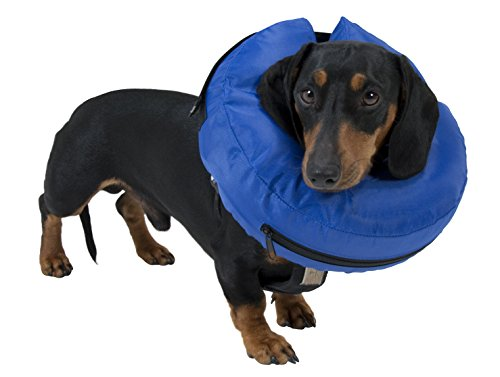 Buster Inflatable Elizabethan Collar – Blue (Size: Medium)