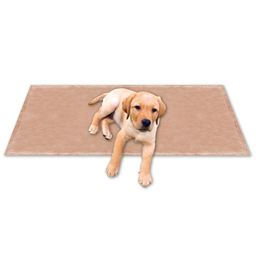 Tierdecke Lammflor Kuschel Fotodruck Haustierdecke Kuscheldecke Hundebett Katzendecke (Kuschel - Supersoft / 60x80 cm / sandbeige - creme) (Lamm Boden)