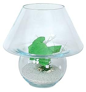 Aquarium 12L Kit boule Champignon