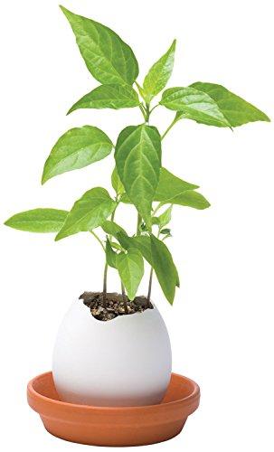 eggling-uova-con-erbe-aromatiche-spicy-red-pepper