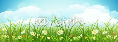 Leinwandbild Meadow 77