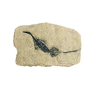 Geoworld cl080K-Dig & Discover Fossil Replica, Marine Reptile