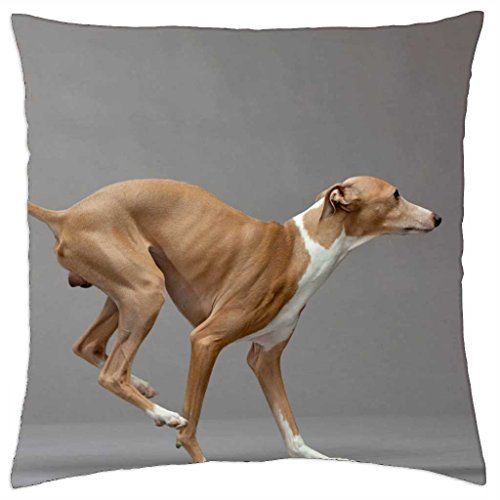 italian-greyhound-throw-pillow-cover-case-18