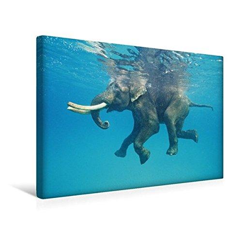 Calvendo Premium Textil-Leinwand 45 cm x 30 cm quer, Auch Dickhäuter brauchen eine Erfrischung - EIN schwimmender Elefant   Wandbild, Bild auf Keilrahmen. und Nikobaren Inseln, Indien Orte Orte