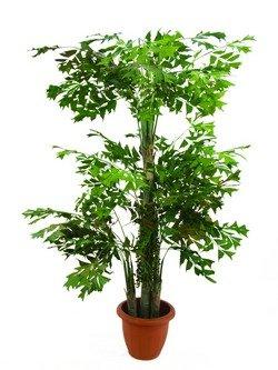 EUROPALMS Fishtail-Palmbaum 1542 Blätter 295cm, Kunstpflanze