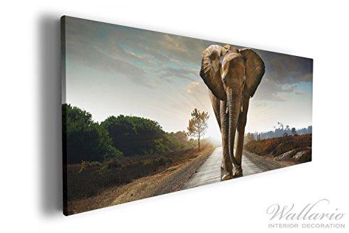 Wallario XXXL Riesen- Leinwandbild Elefant bei Sonnenaufgang in Afrika - 80 x 200 cm in...