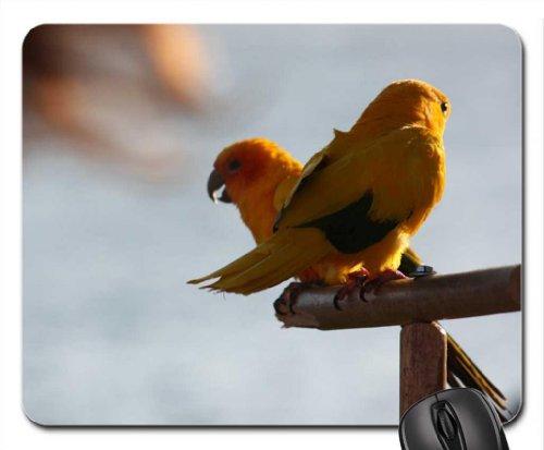 Sun Conure - Parrots Mouse Pad, Mousepad (Birds Mouse Pad)