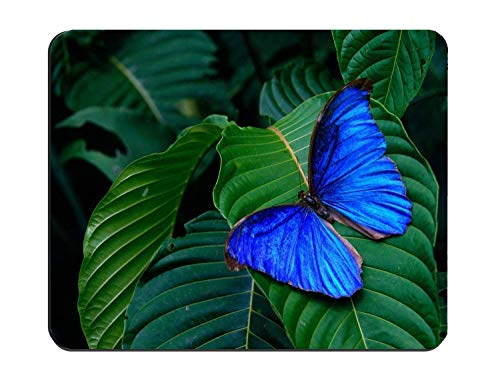 Blue Butterfly Design Mouse pad Gaming Mouse pad Mousepad Nonslip Rubber Backing (Blue Designs Butterfly)