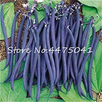 Hot 30 PC/Beutel Bunte Bean Bonsai Köstliche Gemüsepflanze Phaseolus Vulgaris Pflanze, grüne Bohnen, natürliches Wachstum, für Garten: 10