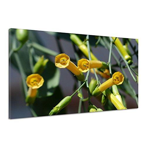 Blaugrüner Tabak Blüte Gelb Nicotiana Glauca Leinwand Poster Druck Bild dz0378 80x60
