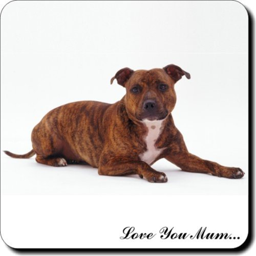 Staffordshire Bull-Terrier, mit englischer Aufschrift