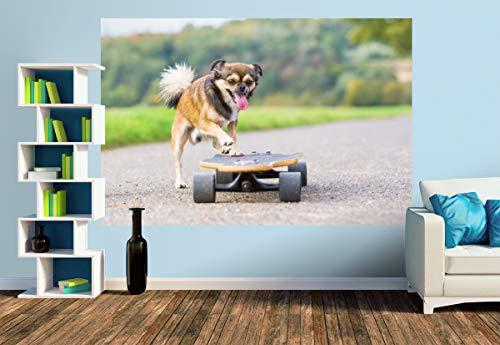 Premium Foto-Tapete Hund mit Skateboard (versch. Größen) (Size M   279 x 186 cm) Design-Tapete, Wand-Tapete, Wand-Dekoration, Photo-Tapete, Markenqualität von ERFURT