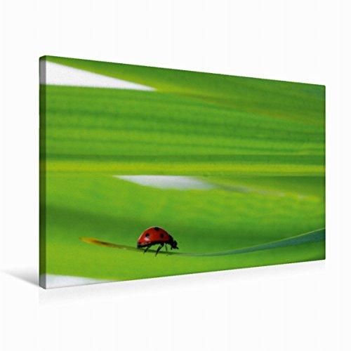 Calvendo Premium Textil-Leinwand 75 cm x 50 cm quer Glücksbringer | Wandbild, Bild auf Keilrahmen, Fertigbild auf echter Leinwand, Leinwanddruck Gesundheit Gesundheit