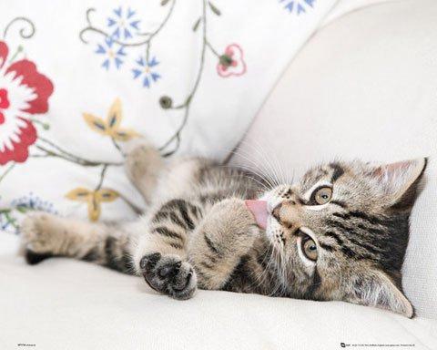 katzeninfo24.de Cats – Kitten Pfotenpflege – Katzen Tiere Animals Mini Poster Plakate – Größe 50×40 cm