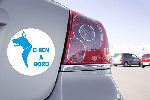 Autocollant Voiture Chien à Bord - 15cm x 15cm, Bleu Clair