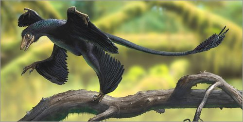 Alu Dibond 40 x 20 cm: A Microraptor perched on a tree branch. von Sergey Krasovskiy / Stocktrek...