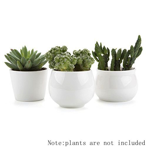 t4u-65-7-7cm-ceramic-white-collection-no31-sucuulent-plant-pot-cactus-plant-pot-flower-pot-container