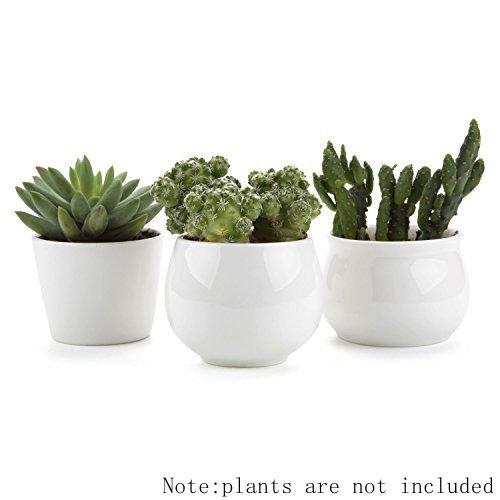 t4u-conjunto-de-3-coleccion-blanco-31-ceramicos-planta-maceta-suculento-cactus-planta-maceta-planta-