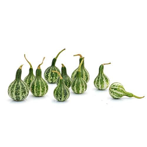 10 Kleinste Kürbisse: Mini-Kürbisse | Dekoration Herbst | Halloween-Deko | Tisch-Deko | Fensterbank-Deko | Winter-Deko