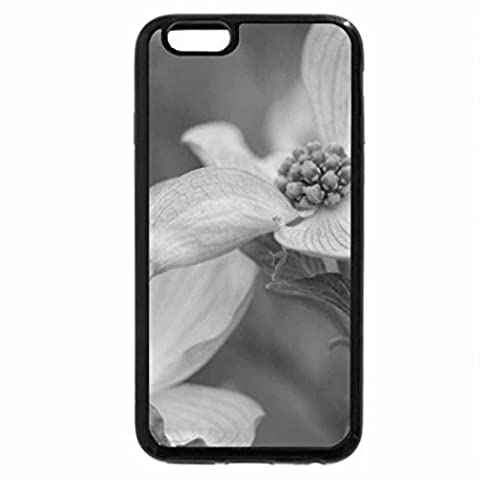 iPhone 3S, Iphone 6 Coque (Noir & Blanc) – Rose Arbre de cornouiller