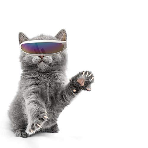 TUDUZ-Haustier Brillen Winddichter Schutz Hündchen-Welpen-Sonnenbrille UV-Sonnenbrillen für Katzen und Kleine Hunde für Fotografie Sonnenbrille (Mehrfarbig)