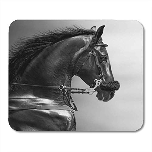 "Gaming Mauspad Gray Horse Black and White Portrait of Sports Stallion in Hackamore Head Animal 11.8""x 9.8"" Decor Office Computer Accessories Nonslip Rubber Backing Mousepad Mouse Mat"