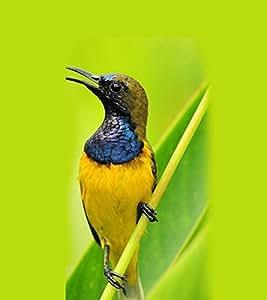 ifasho Designer Back Case Cover for Sony Xperia X :: Sony Xperia X Dual F5122 (Bird Bird Trap Nets Usa Bird Seed)