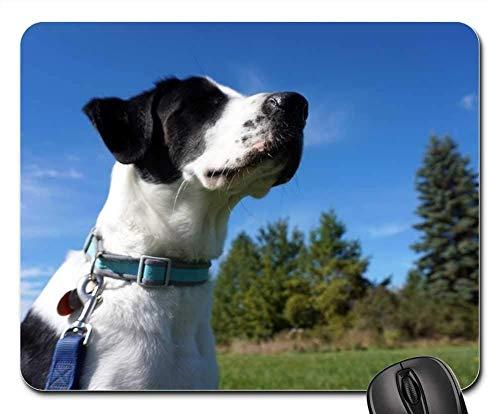 Gaming-Mauspads, Mauspad, Hundefall außerhalb Autumn Pet Happy Puppy Nature