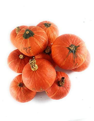 10 Hokkaido Shokichi red: kleine japanische Kürbisse | Deko-Kürbisse | Herbst-Deko | Halloween-Kürbisse | Speisekürbisse