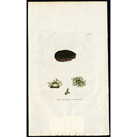 theprintscollector antico Botanica print-fine Spun gelatinosi