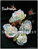 SwansGreen 100 Stück Rare Climbing Rose Blumensamen Efeu-Rebe Hängen Schöne Staude Blumen Bonsai Garland Dekoration-Partei 2