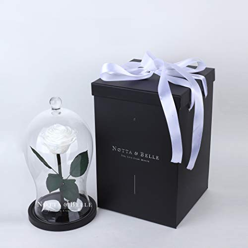 Premium-Rosen 20 cm