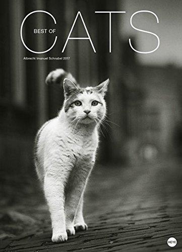 Cats Edition - Kalender 2017