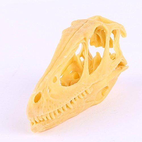Adorno Hogar Altificial Fósil de Cráneo Esqueleto de Dinosaurio Deinonychus Enseñanza Resina Decoración