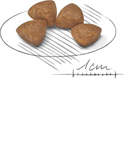 Royal Canin Hundefutter X-Small Junior, 1,5 kg, 1er Pack (1 x 1.5 kg) - 4