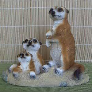 Grande famille de suricates