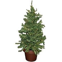 Kleiner Tannenbaum Im Topf.Suchergebnis Auf Amazon De Fur Weihnachtsbaum Im Topf