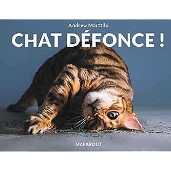 Chat défonce