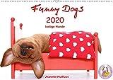 Funny Dogs (Wandkalender 2020 DIN A2 quer): lustige Hunde (Monatskalender, 14 Seiten ) (CALVENDO Tiere)