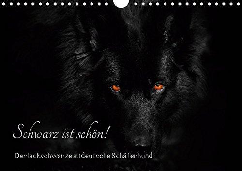 Schwarz ist schön! Der lackschwarze altdeutsche Schäferhund (Wandkalender 2019 DIN A4 quer): Der...