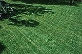 Petsdelite ® Blackjack Bermudagrass semi perfetto per la casa, i parchi o i campi sportivi.