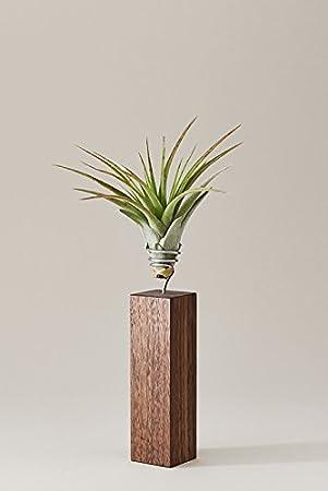 Luftpflanzen Metall Topf cooles Design