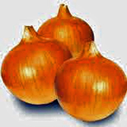 Zwiebel, Texas Frühe Grano, Erbschaft, Bio 500 Samen, Short Tag, Vidiala Typ