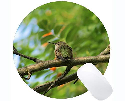 Kundengebundenes Rechteck-nicht Beleg-GummiMousepad, Kolibri-Schwarzes Chinned Spiel-runde Mausunterlagen