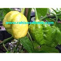 Portal Cool Trinidad Cal-Amarillo 7 Pod / 7 Pot chile - Un ridículamente caliente y picante de los chiles