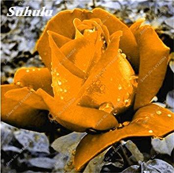 100 pièces / sac Couleur Rare Rose Graines Outdoor Bonsai Graines de fleurs vivaces Fleurs Graines Plante en pot pour jardin Décor 10
