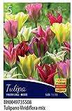 BULBI DA FIORE DI TULIPANO IN CONFEZIONE DA 5 BULBI (virdiflora mix)